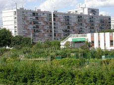 jardin communautaire à Montreuil (93)